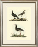 Selby Sandpipers II Prints by John Selby