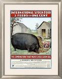 International Hog Swine Feed Framed Giclee Print
