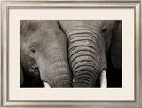 Calin d'Elephants Prints by Michel & Christine Denis-Huot
