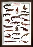 Crocodiles and Alligators Photo