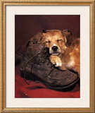 Dog Sleeping on Shoes Prints