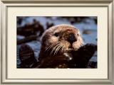 Remember Valdez Prints by Bob Talbot
