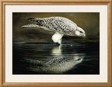 Drinking Falcon Poster by Renato Casaro