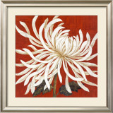 Spider Mum I Prints by Judy Shelby
