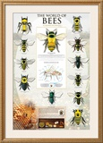 The World Of Bees Posters
