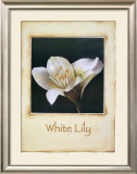 White Lily Prints by Richard Penn