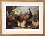 Barnyard with Chickens Print by Melchior d'Hondecoeter