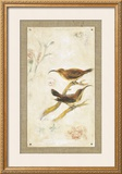Long-Billed Sunbird Print by Jillian David