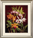 Orchid Trio II Art by Rodolfo Jimenez