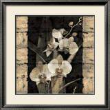 Orchids in Bloom II Posters by John Seba