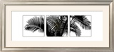 Palm Frond Triptych III Print by Bill Philip