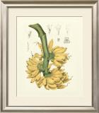 Island Fruits II Posters by Berthe Hoola Van Nooten