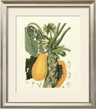 Island Fruits IV Posters by Berthe Hoola Van Nooten