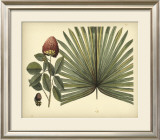 Antique Brazilian Palm Posters by Sir Hans Sloane