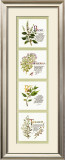 Kitchen Herbs I Prints by G. Phillips