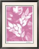 Flower Shadow VI Limited Edition Framed Print by Lois Bender