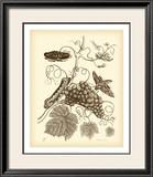 Nature Study in Sepia III Art by Maria Sibylla Merian