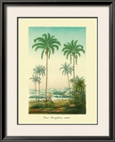 Coco Palm Framed Giclee Print by Ch. Lemaire