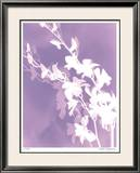 Flower Shadow V Limited Edition Framed Print by Lois Bender