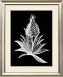 Pineapple Noir I Prints