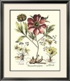 Framboise Floral I Posters by Besler Basilius