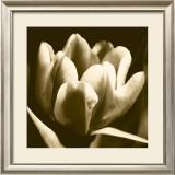 Sepia Tulip I Print by Renee Stramel