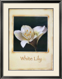 White Lily Posters by Richard Penn
