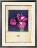 Iris Prints by Richard Penn