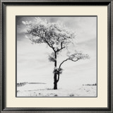 Lone Tree no. 3, Peak District, England Art by Dave Butcher