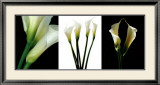 White Callas Prints by Helvio Faria