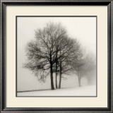 Winter Grove Prints by Ilona Wellmann