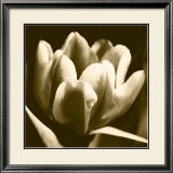 Sepia Tulip I Poster by Renee Stramel
