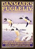 Denmark Bird Society Framed Giclee Print