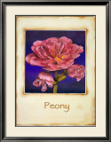 Peony Prints by Richard Penn