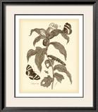 Nature Study in Sepia I Prints by Maria Sibylla Merian
