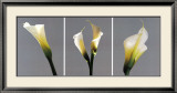 Grey Callas Print by Helvio Faria