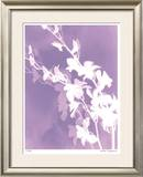 Flower Shadow V Limited Edition Framed Print by Lois Bender