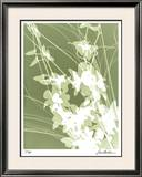 Flower Shadow III Limited Edition Framed Print by Lois Bender