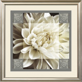 Dahlia Icon II Prints by Christine Elizabeth