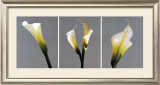 Grey Callas Prints by Helvio Faria