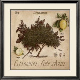 Citronnier, Cote d'Azur Prints by Vincent Perriol