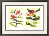 Tiger Lily Petites Posters by Barbara Brown