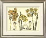 Narcissus in Bloom I Prints by  Langlois