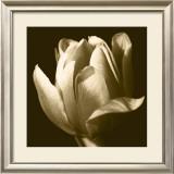 Sepia Tulip II Prints by Renee Stramel
