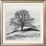 Misty Tree, Peak District, England Prints by Dave Butcher