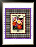 Strawflower Seed Pack Framed Giclee Print