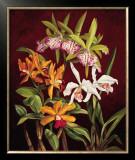 Orchid Trio II Print by Rodolfo Jimenez