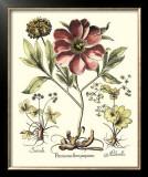 Framboise Floral I Prints by Besler Basilius