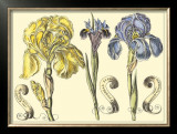 Iris in Bloom I Posters by  Langlois