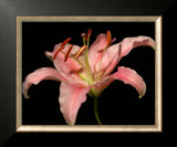 Dream Lilies II Posters by Renee Stramel